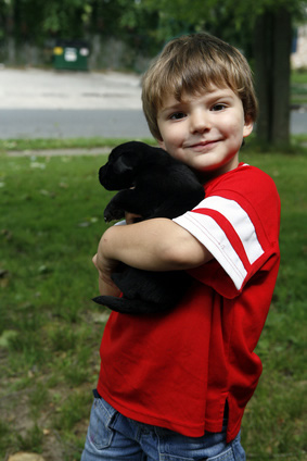 Boy with Labrador Retriever puppy