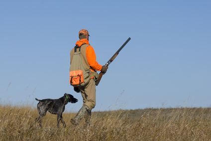 Hunting with a black lab
