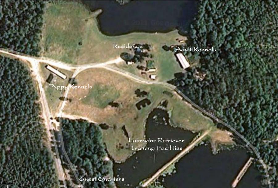 Twin Lakes Kennel Labrador Retriever Breeding & Training Facilities