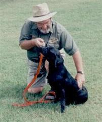 Working with a black Labrador retriever