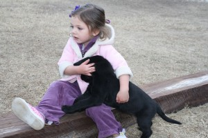 Girl with Labrador Retriever puppy