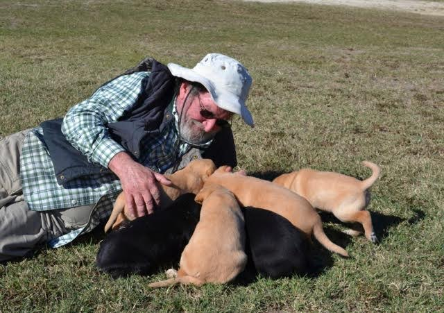 6 tips training Labrador Retriever by Woody Thurman, Labrador Retriever Trainer and Breeder
