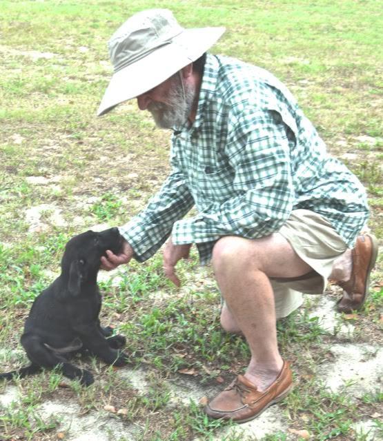 teaching a labrador retriever puppy, labrador retriever puppy training tips