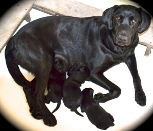 Healthy Mom & Puppies