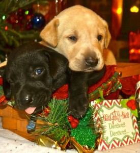 Naughty and Nice puppies
