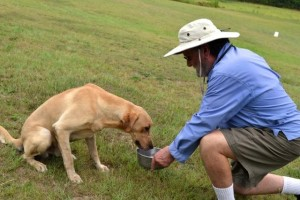 Summer Tips For Labrador Retreiver Dogs in heat, Paladin relieved in Heat