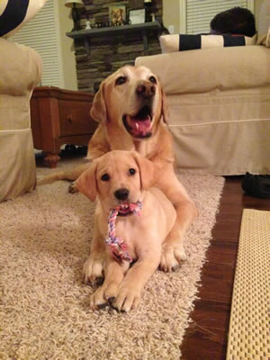 Piper, a new pup, with Bauer