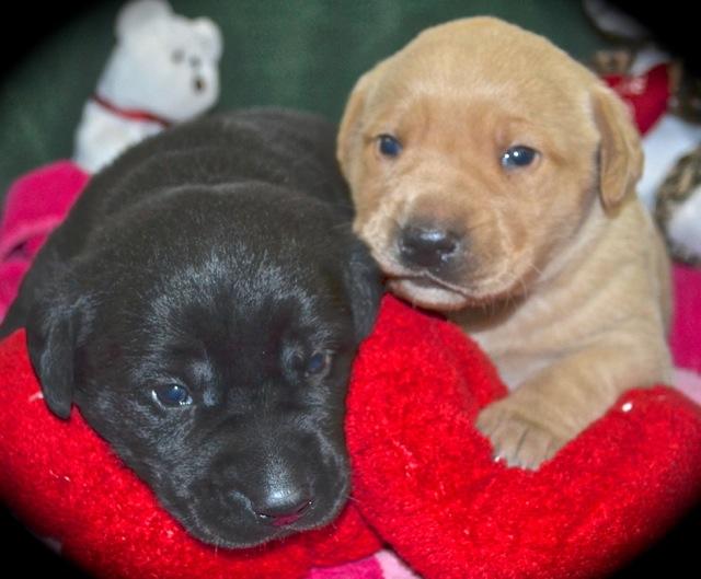 Puppy Buddies