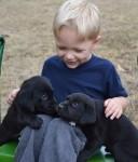 Rylan with Labrador retriever puppies