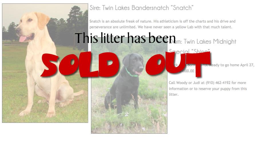 Labrador retriever puppies by Snatch & Shine
