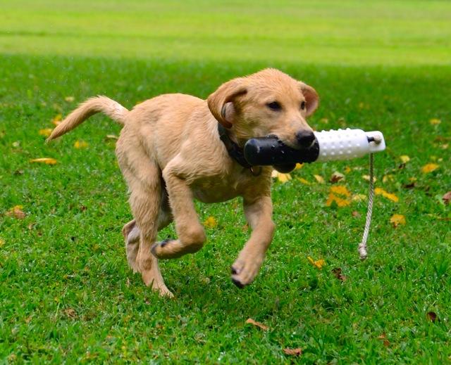 Get the stick