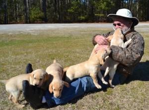 Nuturing a Labrador Retriever by Woody Thurman, Labrador Retriever Trainer and Breeder